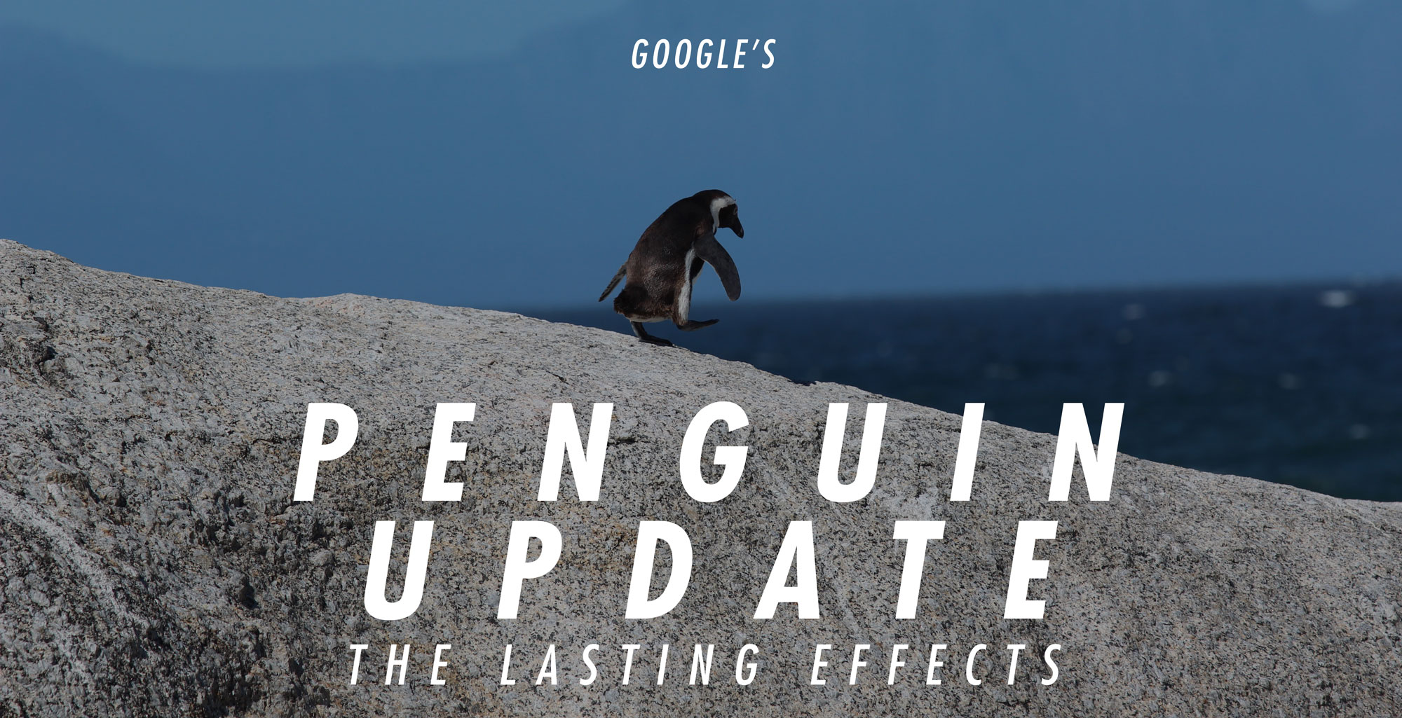 penguin-banner-crop
